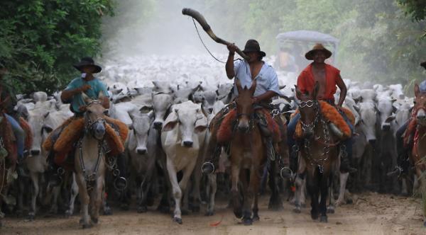 Produtores rurais devem atualizar cadastro da agropecuária e de estoque de animais
