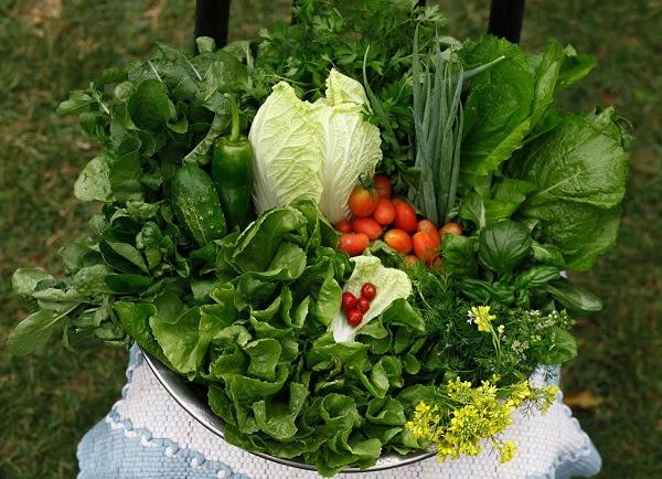Pequenos produtores buscam capacitações para empreender com orgânicos e agroecologia