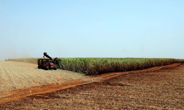 Com mercado aquecido, estado aumentou em cinco vezes a exportação de açúcar
