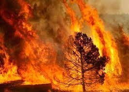 Incêndio no Parque Nacional Otuquis, na Bolívia, dura três dias