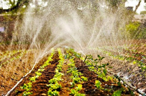 Dia do agricultor: ações do Governo fortalecem a produção do campo