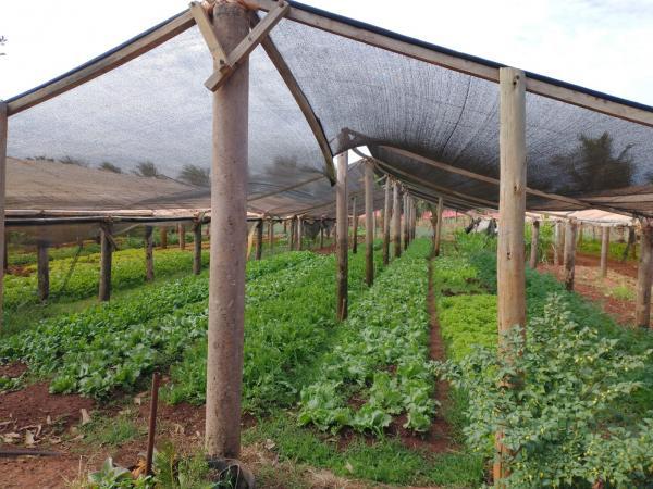 Agraer visita produção de hortaliças em estufas, com energia solar e biodigestor