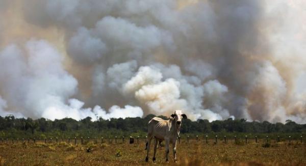 Desmatamento na Amazônia cai pelo 2º mês