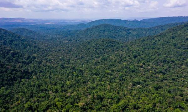 Unesco e Amazonas lançam plano de ação para Amazônia