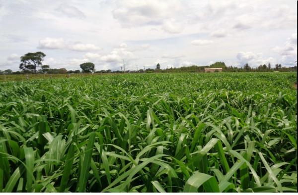 Reforma de pastagem contribui da conservação do solo à produção de leite