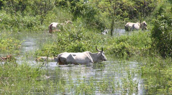 União reconhece situação de emergência no Pantanal