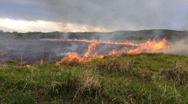 Riscos de queimadas no campo aumentam durante o período de estiagem