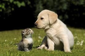 Gerência Municipal de Saúde realizará vacinação em cães e gatos