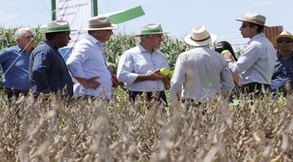 Governo financia programa que avalia eficiência de defensivos agrícolas da soja e milho