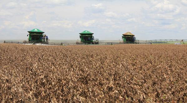 MS deve colher 9 milhões de toneladas de soja nesta safra