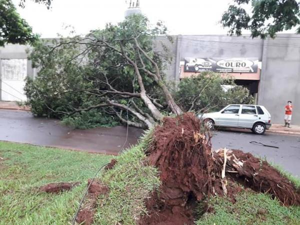 Defesa Civil Estadual monitora alagamentos e quedas de árvores em MS