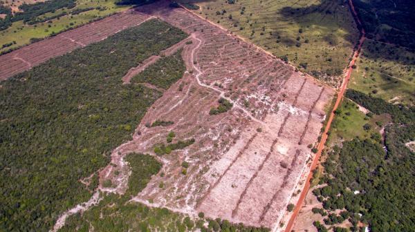 Desmatamento em Área de Proteção Ambiental desespera empresário